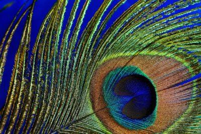 Ewolucja zmysłu estetycznego