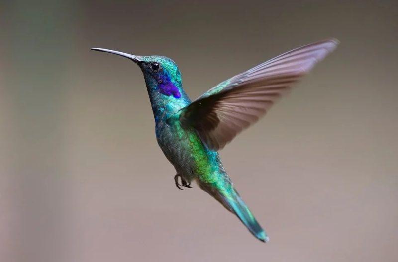 Inteligentny projekt u ptaków i owadów jako inspiracja dla aeronautyki oraz innych dziedzin nauki