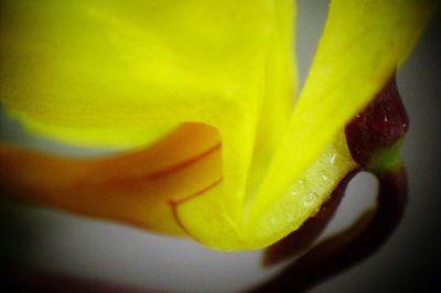 Kwiaty zmieniają kolor w odpowiedzi na zmiany klimatyczne