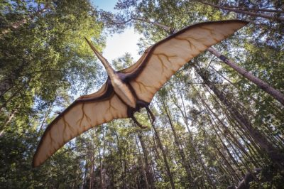 Odnaleziono filogenetycznych krewnych pterozaurów