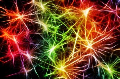Neuronalny detektor granic – czyli o tym, jak mózg tworzy mapy