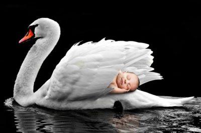 Molekularne podstawy przedwczesnego porodu spowodowanego stresem matki